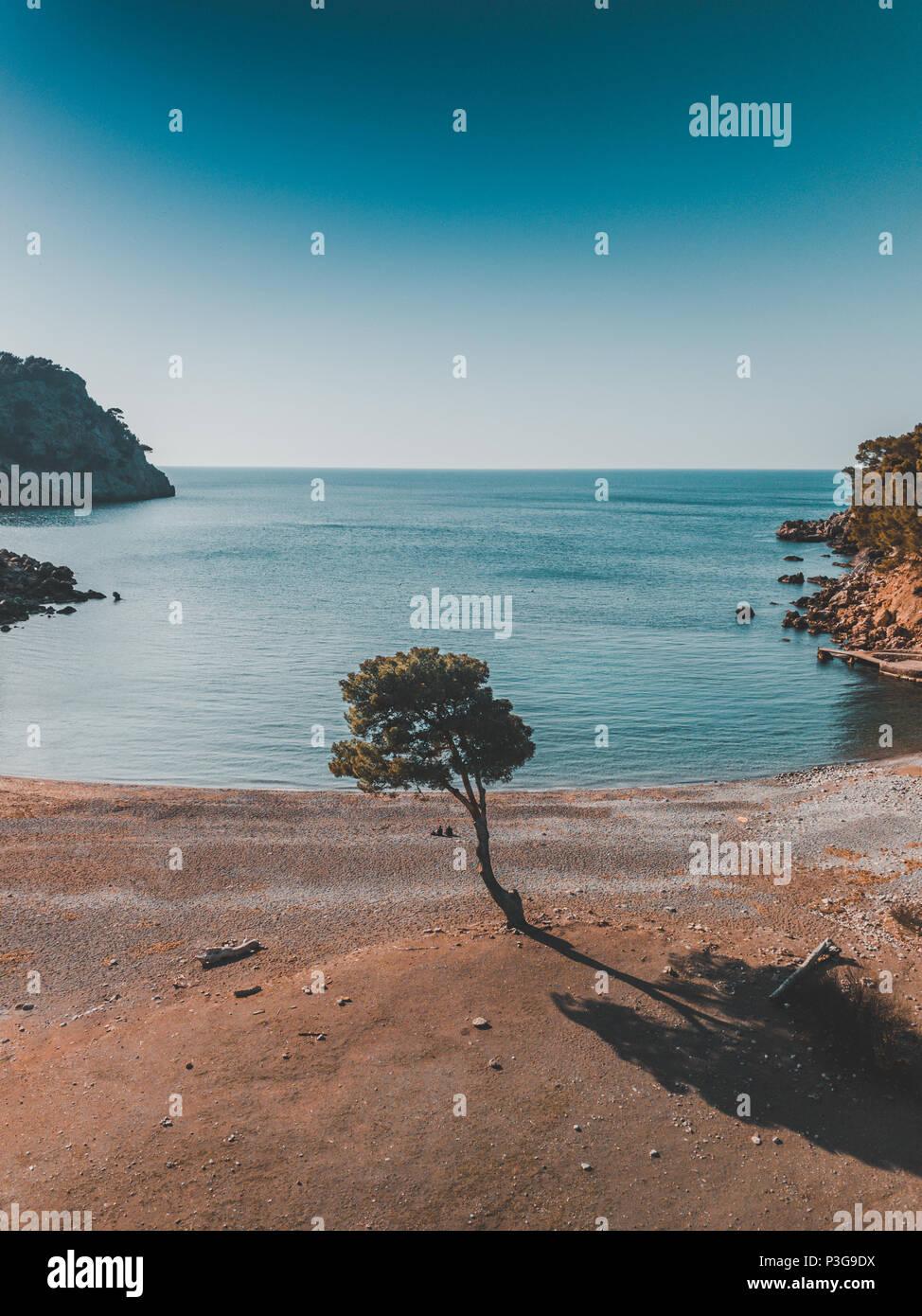 Baum alleine am Strand, Pärchen am träumen Urlaub genießen - Stock Image