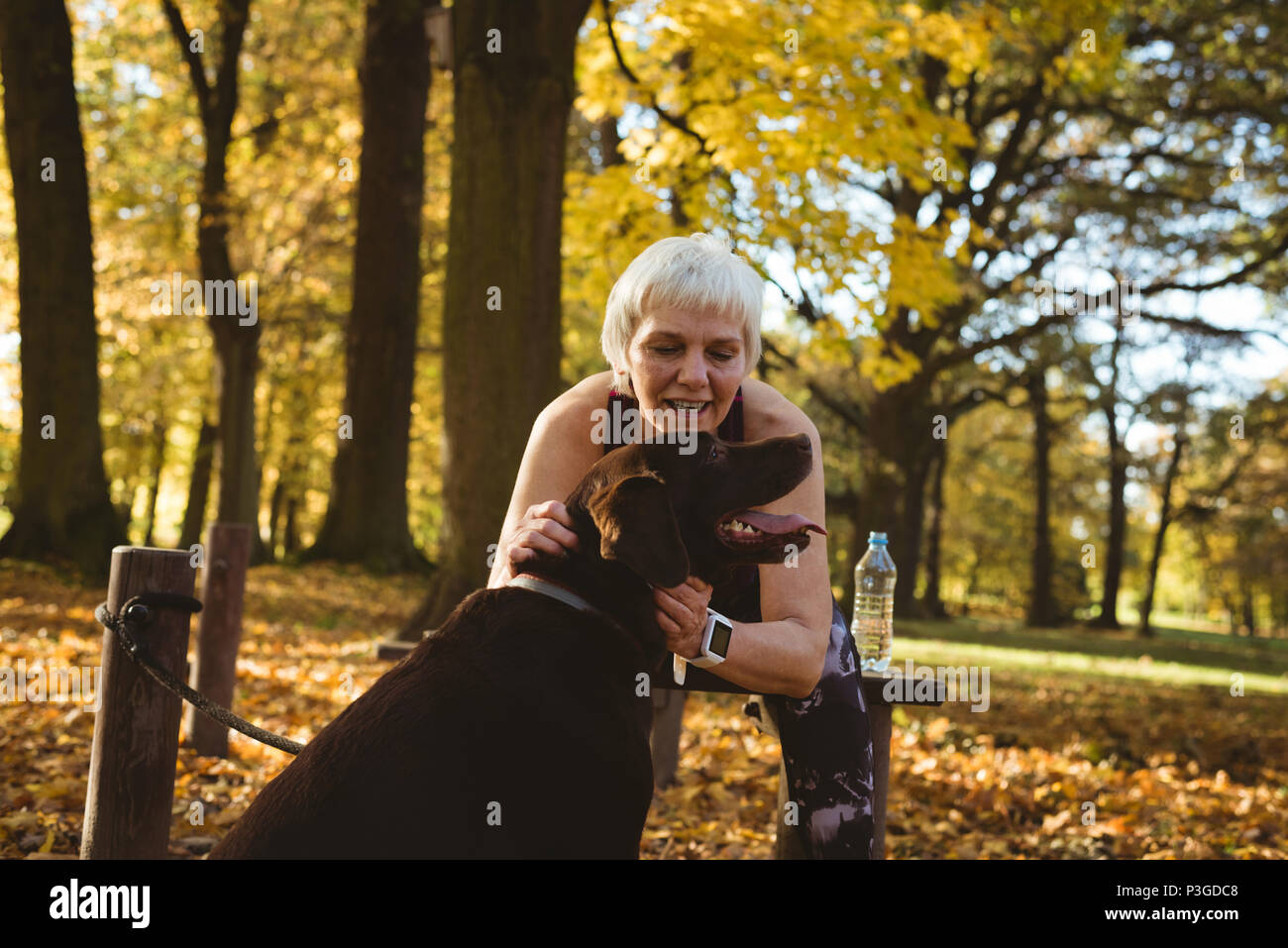 Senior woman in a park stoking her dog - Stock Image
