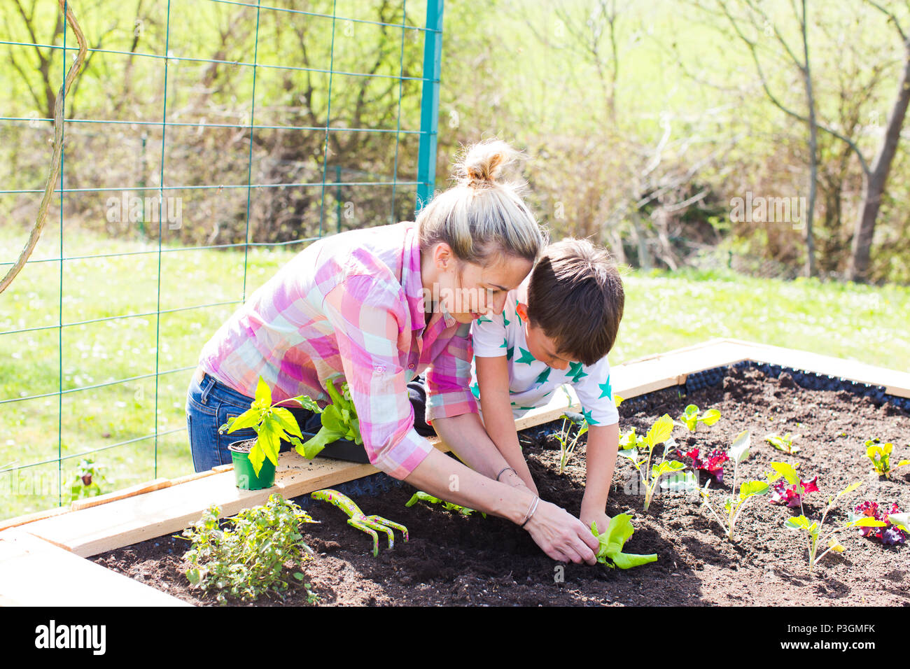 beautiful mother and her blond son planting salad in the raised bed in her garden - Stock Image