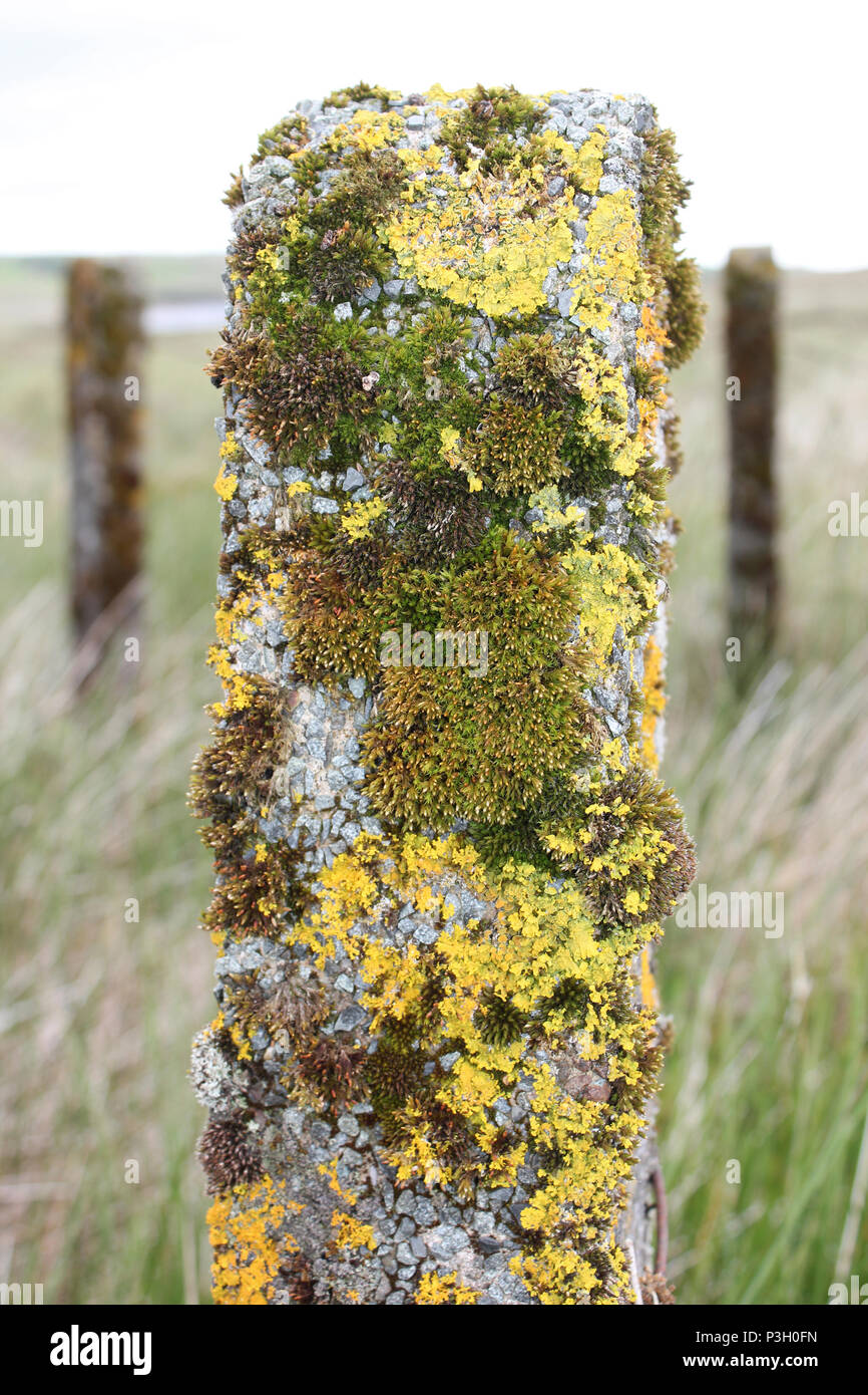 Lichen and Moss On Fencepost Stock Photo