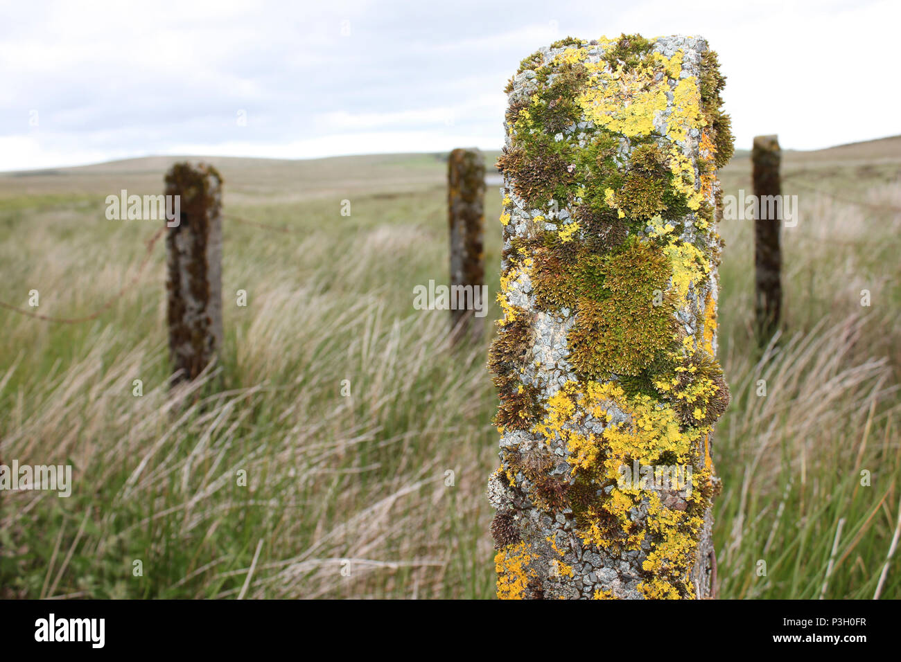 Lichen and Moss On Fencepost - Stock Image