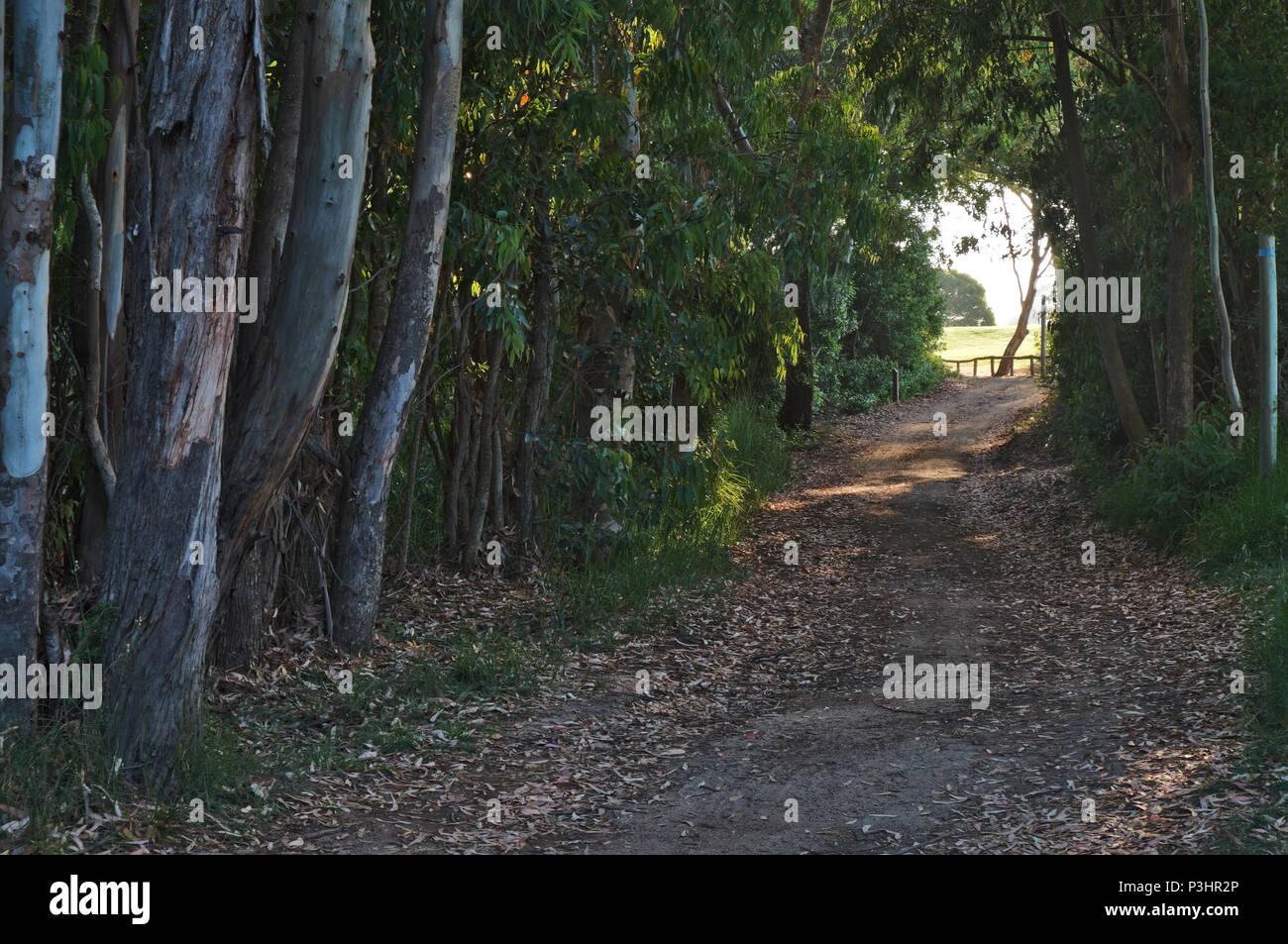 Hiking path Sao Lourenco trail in Ludo-Quinta do Lago. Algarve, Portugal - Stock Image