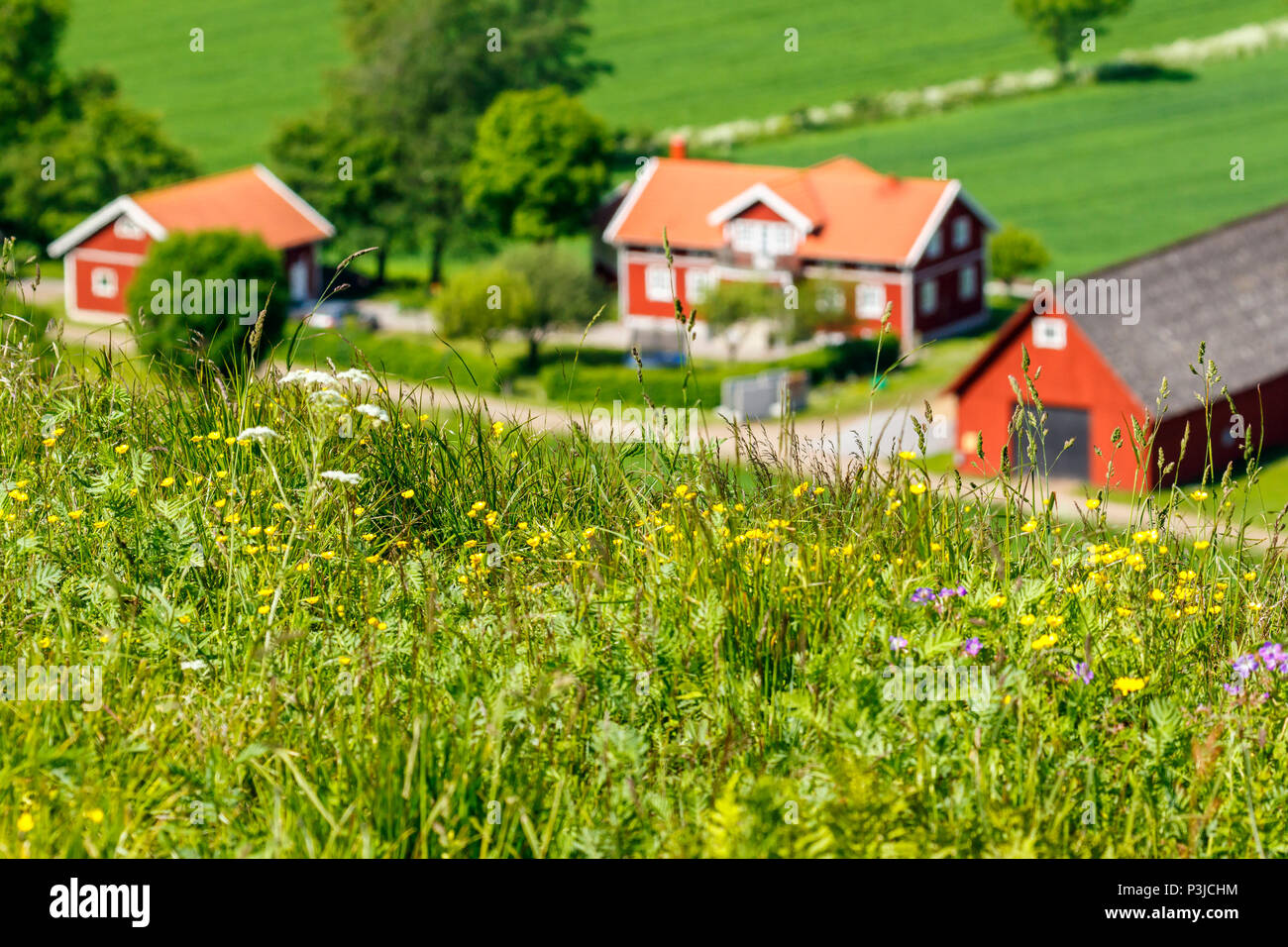 Meadow flowers with a farm in the background - Stock Image