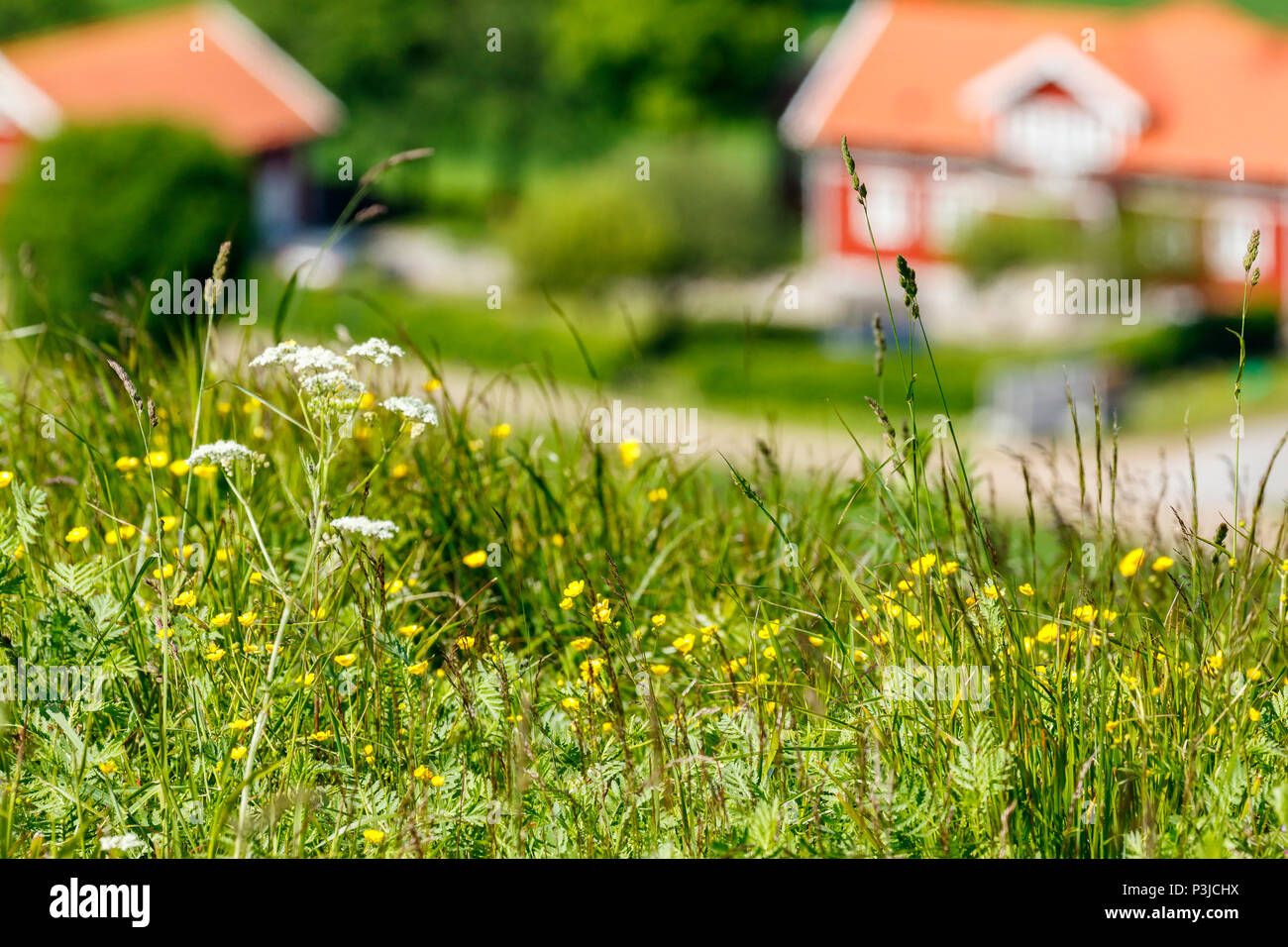Summer flowers on a meadow with houses in the background - Stock Image