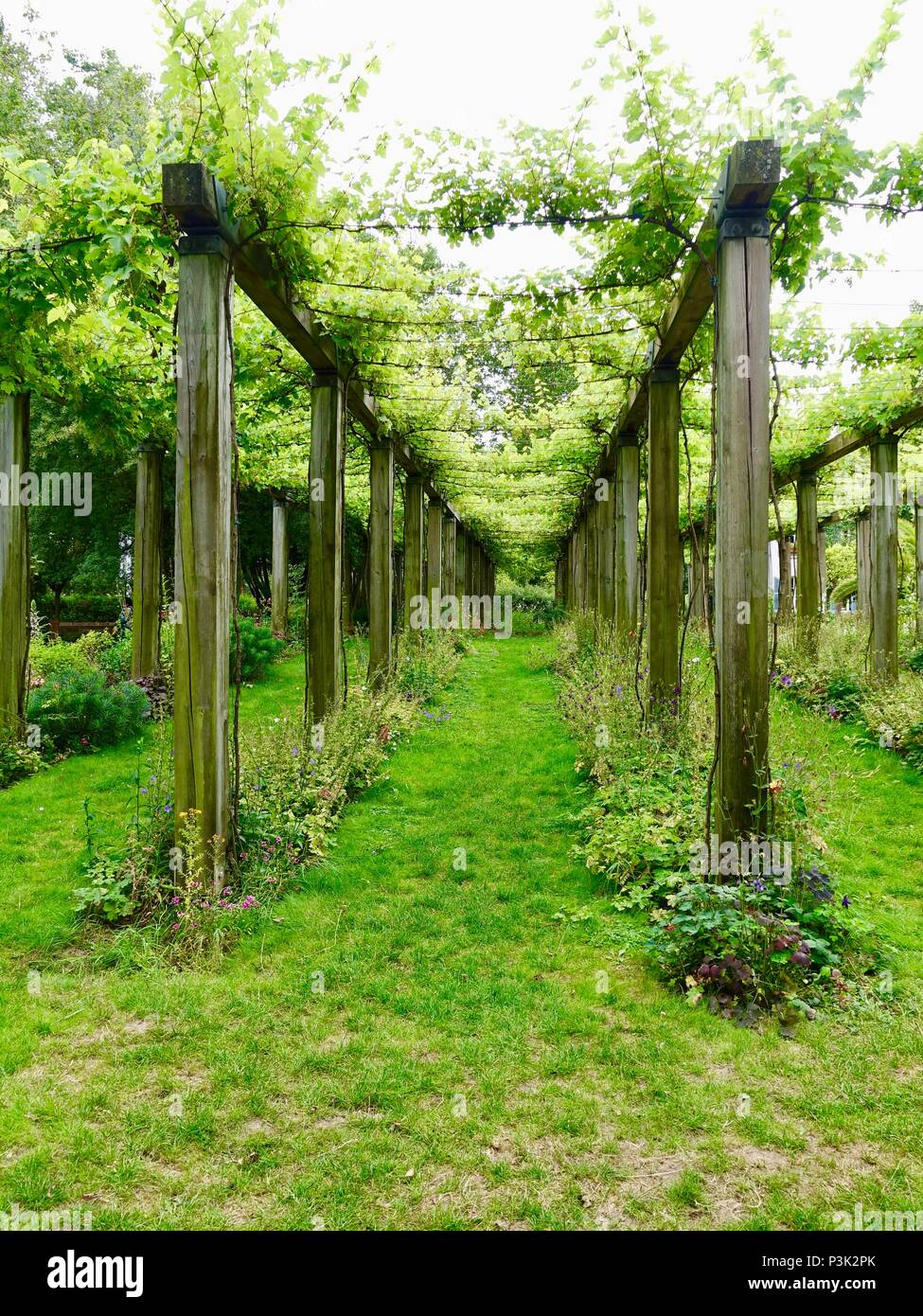 Very leafy vines growing on a high trellis in June, Bercy Park, Paris, France - Stock Image