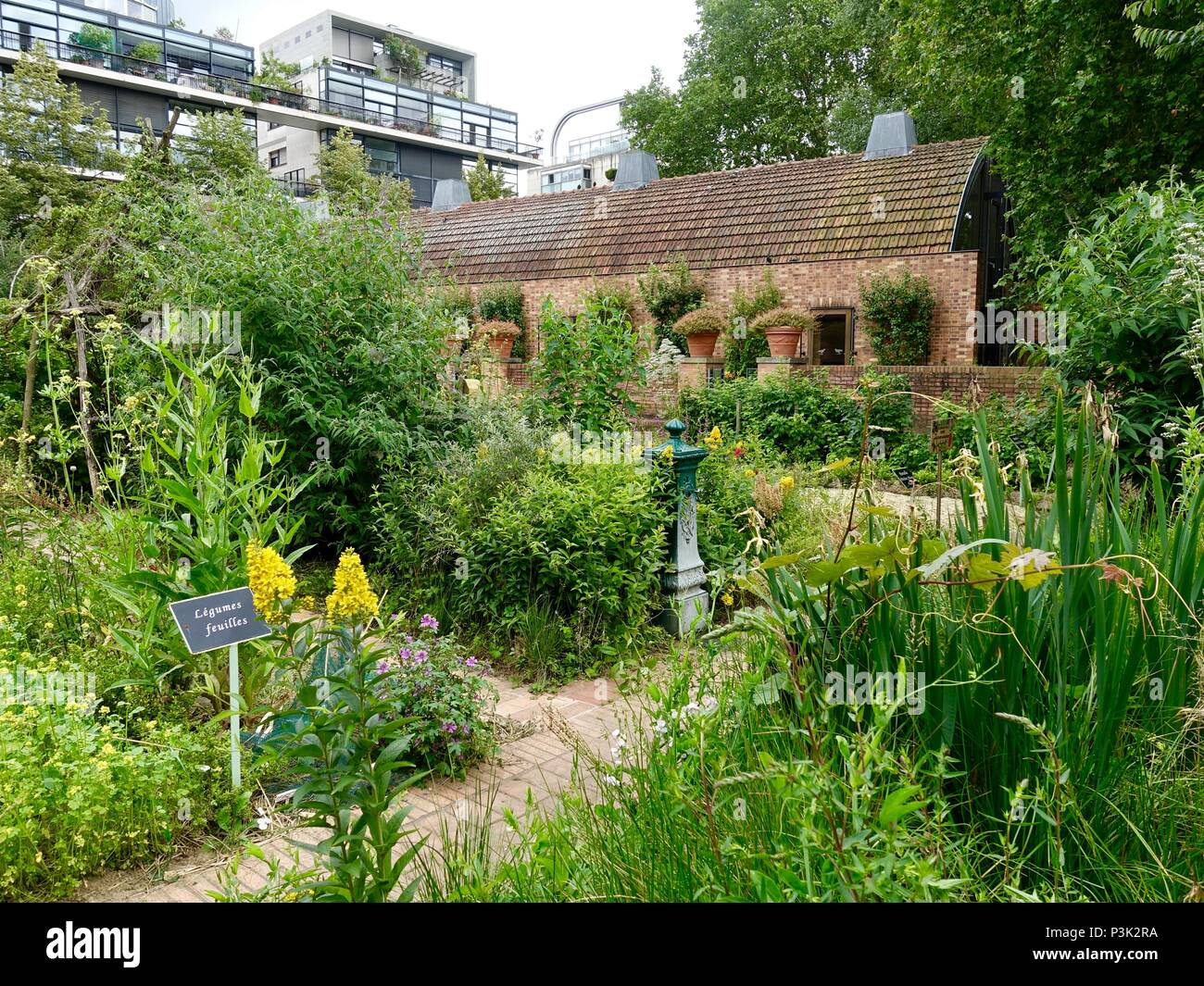 Parisian kitchen garden overlooked by modern apartments, Bercy Park, Paris, France - Stock Image