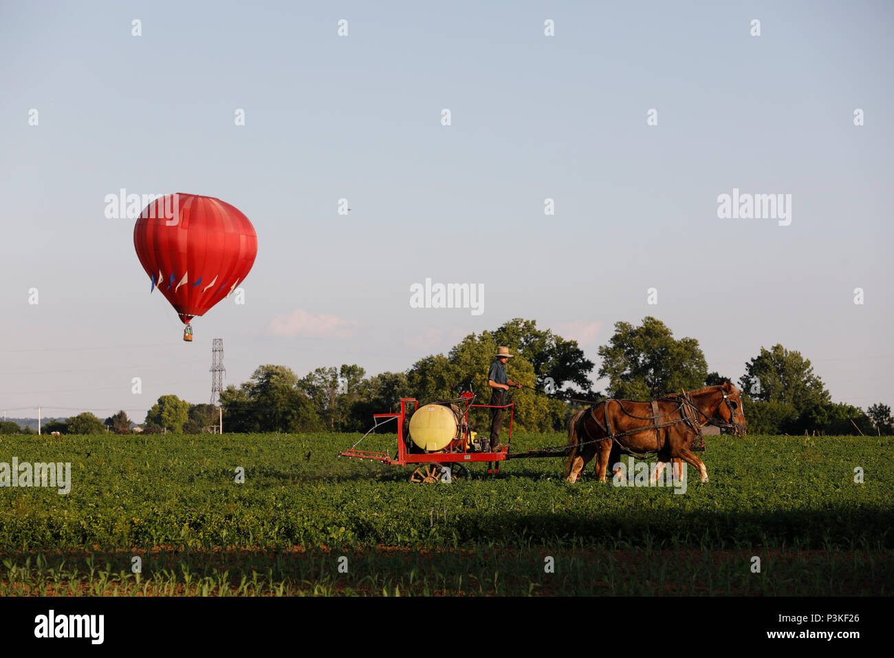 Amish Farmer working in field while hot air balloon rising in background, Lancaster County, Pennsylvania, USA Stock Photo