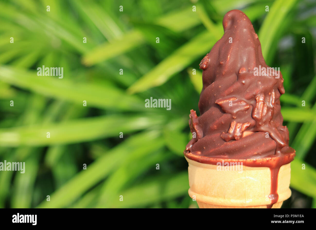 Melting Chocolate Dipped Soft Serve Ice Cream Cone with Blurred Green Bush in Background - Stock Image