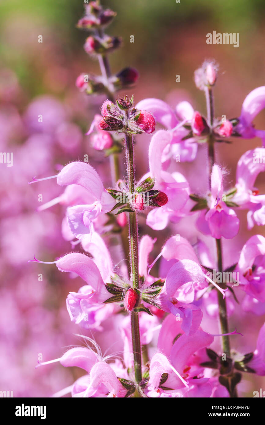 Pink Color Bouquet Of Flowers In Meadow Magic Pink Flower On