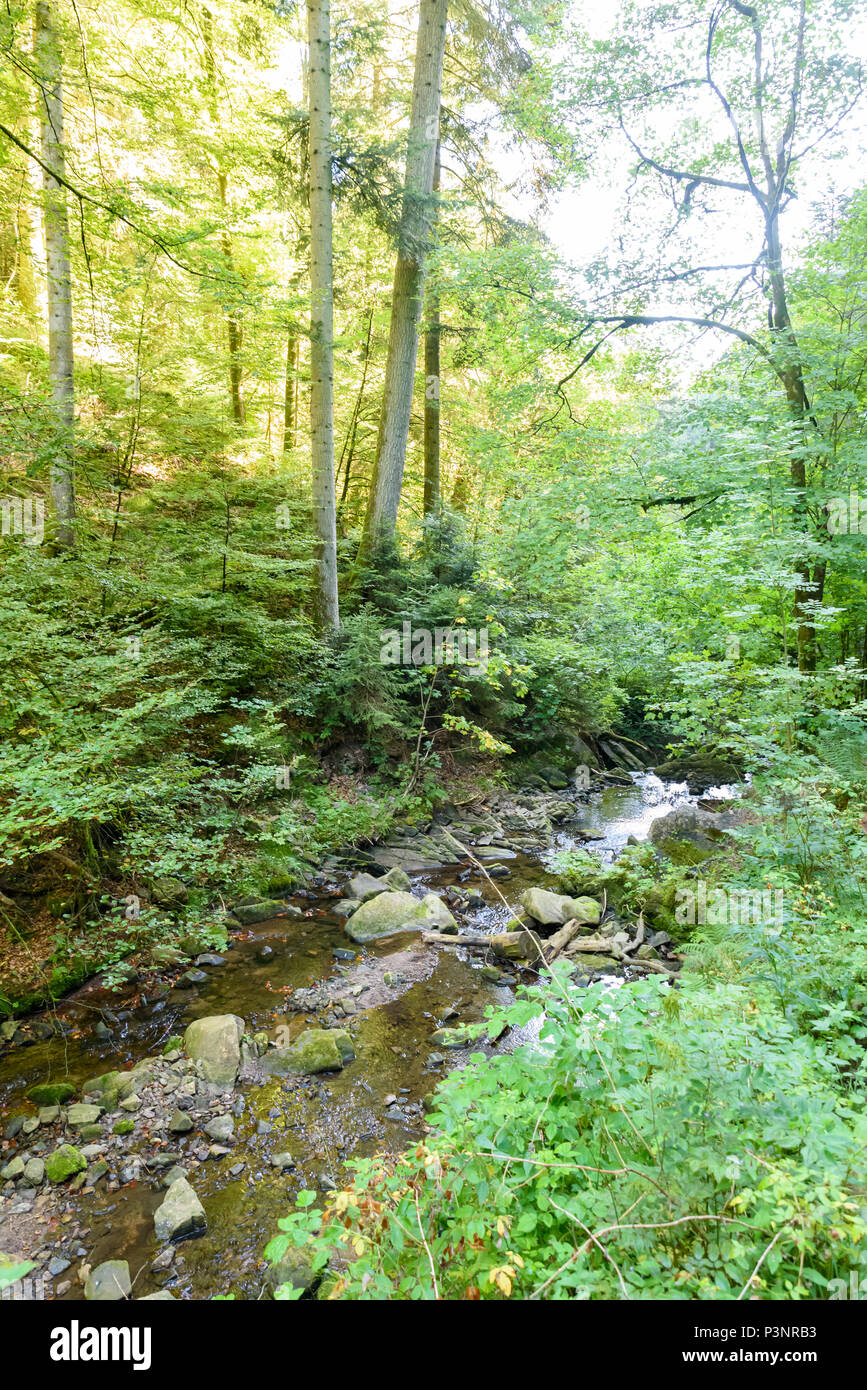 Wutach Gorge with river and waterfalls - Walking in beautiful landscape of the blackforest, Germany - Stock Image