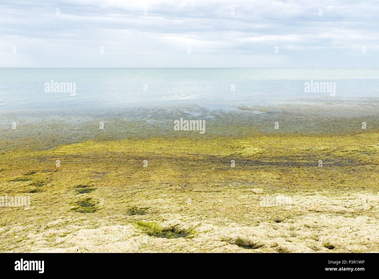 Beach with green seaweeds on the beach. ecology and natural disasters concept. - Stock Image