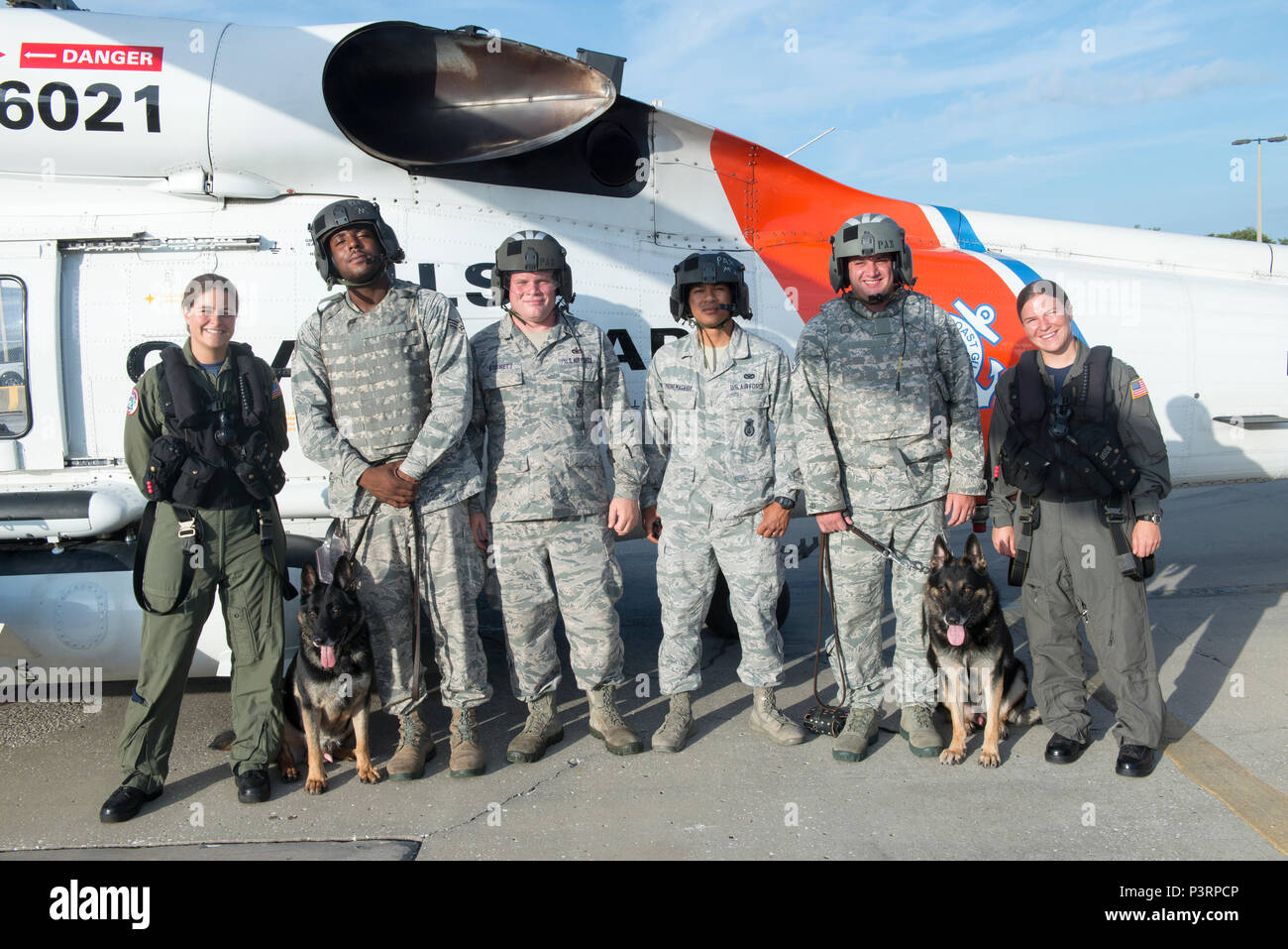 Members from Coast Guard Air Station Clearwater, Fla., team up with members from Air Force 6th Security Forces Squadron, military working dog division, MacDill Air Force Base, Tampa, Fla. to conduct canine training at the air station, Friday, July 29, 2016. The training helps prepare the dogs for the sights and sounds of a helicopter prior to deployment. (U.S. Coast Guard photo by Petty Officer 2nd Class Ashley J. Johnson) Stock Photo