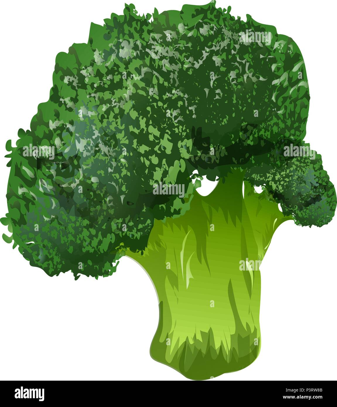 broccoli vector 3d illustration stock vector image art alamy https www alamy com broccoli vector 3d illustration image208893115 html