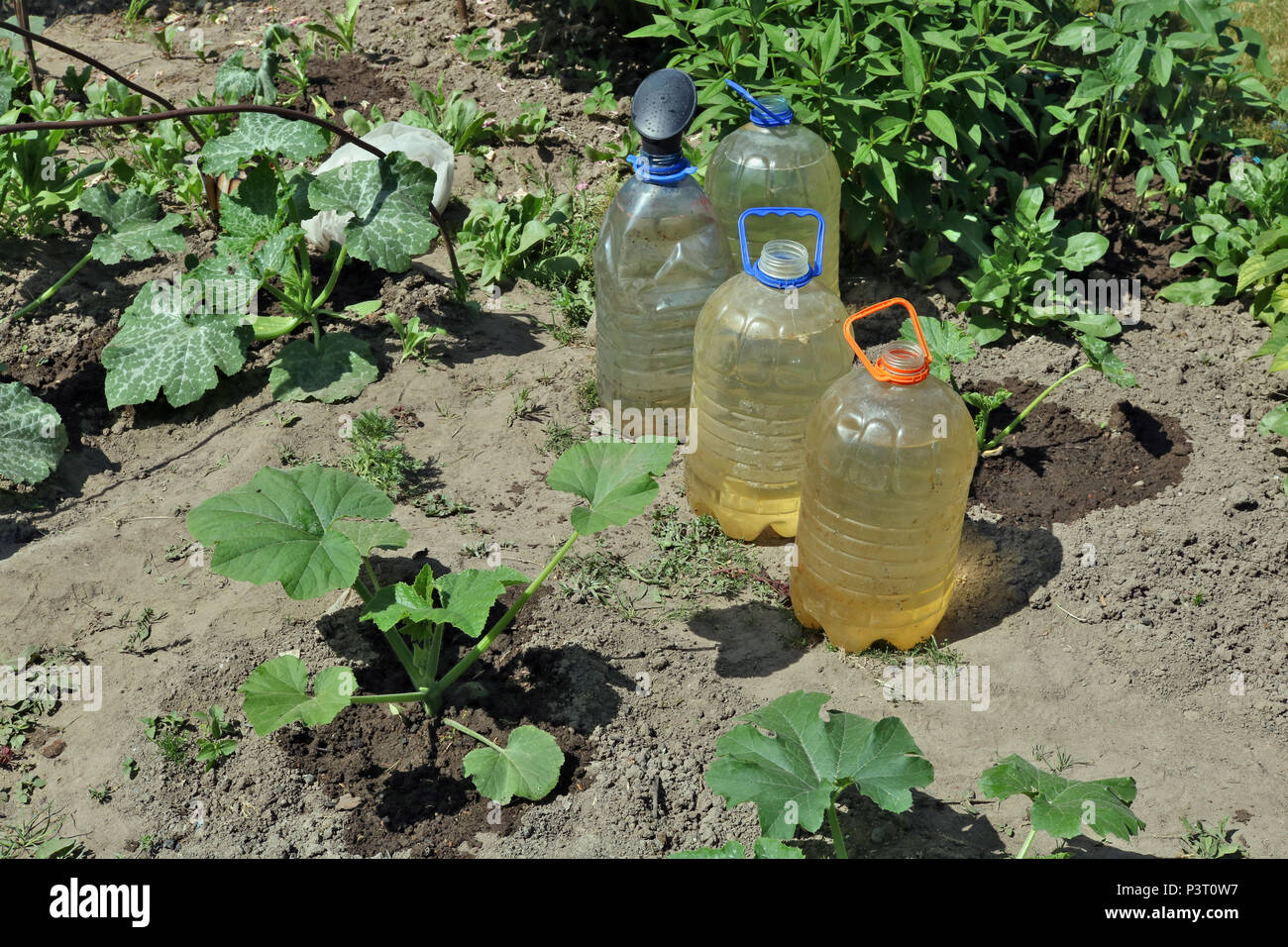 Thirst concept. Hot  summer day and the water in buckets and cans on vegetable bed. June sunny outdoor concept - Stock Image