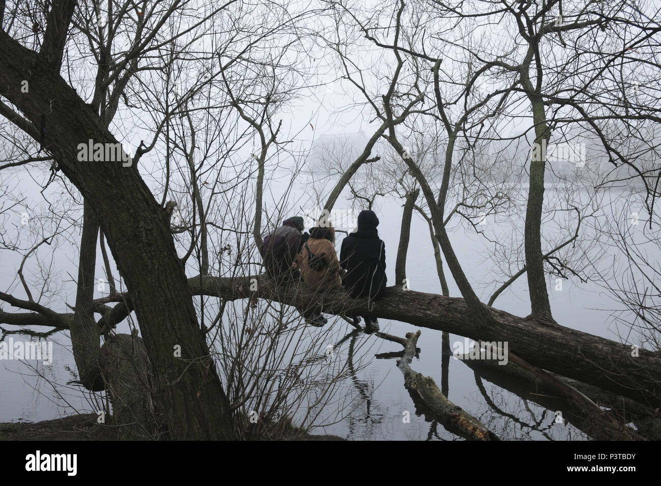 Berlin, Germany, Three young people sitting on a branch on the Rummelsburger bay in Berlin-Friedrichshain Stock Photo