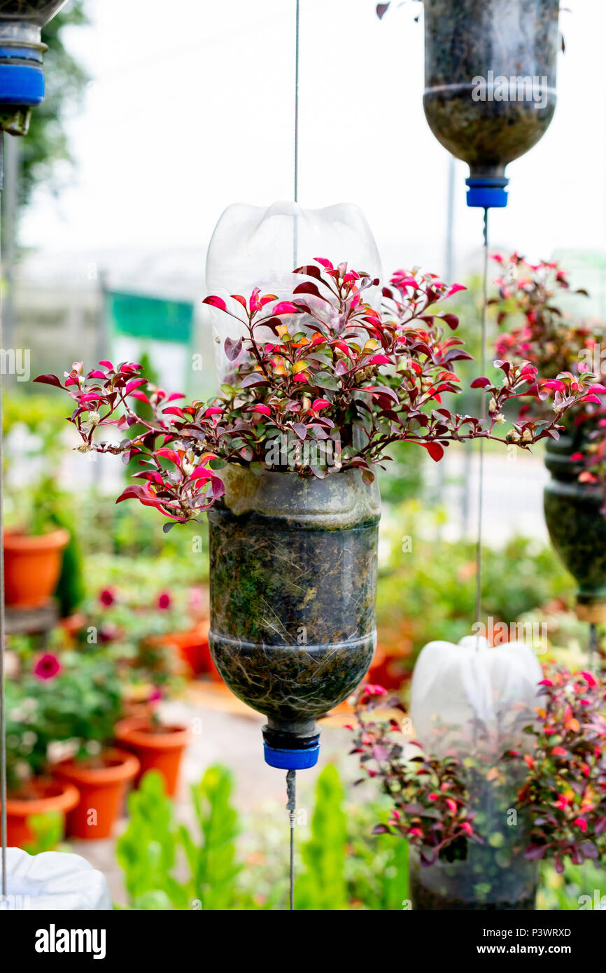 Recycle Plastic Bottles As Flower Pots Stock Photo Alamy