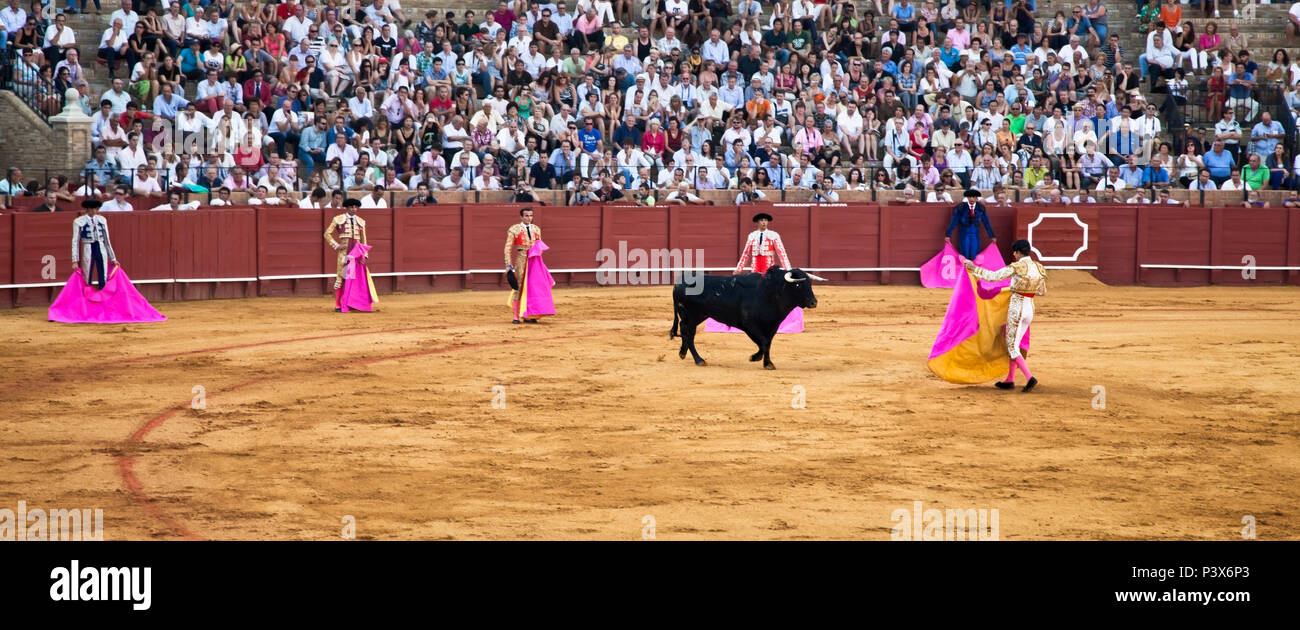 SEVILLE,SPAIN-SEP 11:Toreros bullfighting at the Real Maestranza de Caballeria de Sevilla, Sep 11, 2011, Seville, Spain.Royal Cavalry of Seville is It - Stock Image