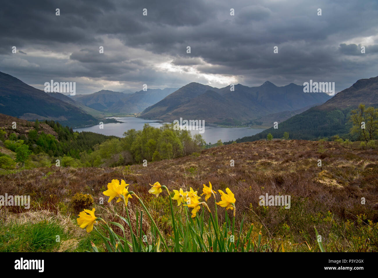 View over Loch Duich and the mountain summits of the Five Sisters of Kintail from Bealach Ratagain / Ratagan viewpoint, Highland, Scotland, UK Stock Photo