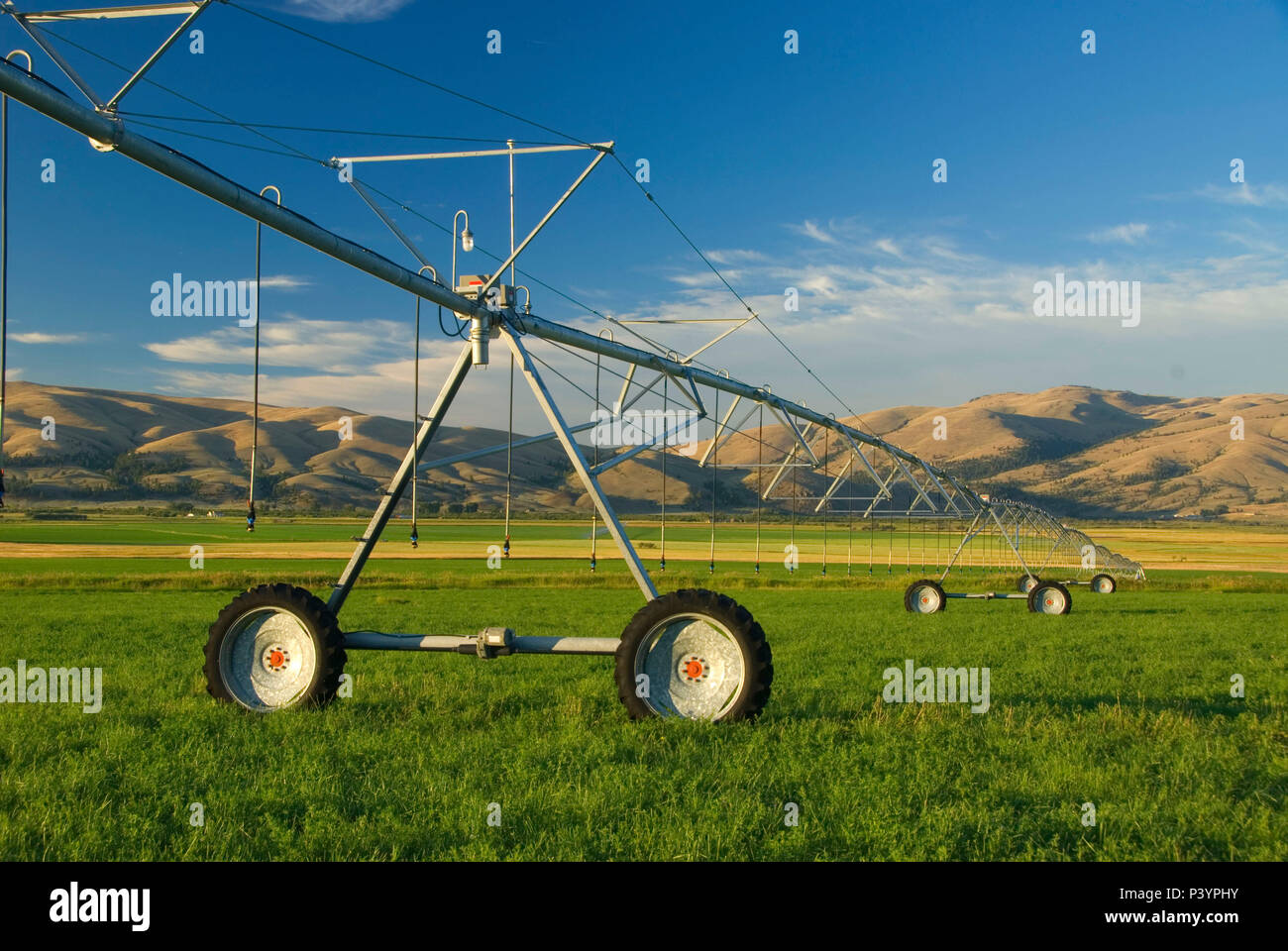 Irrigated pasture, Lewis and Clark County, Montana - Stock Image