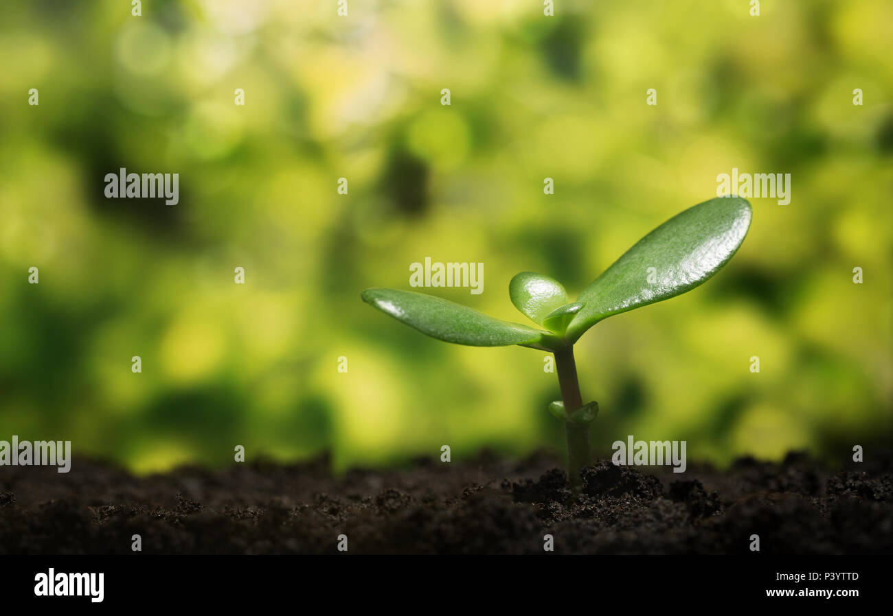 Nature background, symbol. Small plant growing up from the soil with defocused background Stock Photo