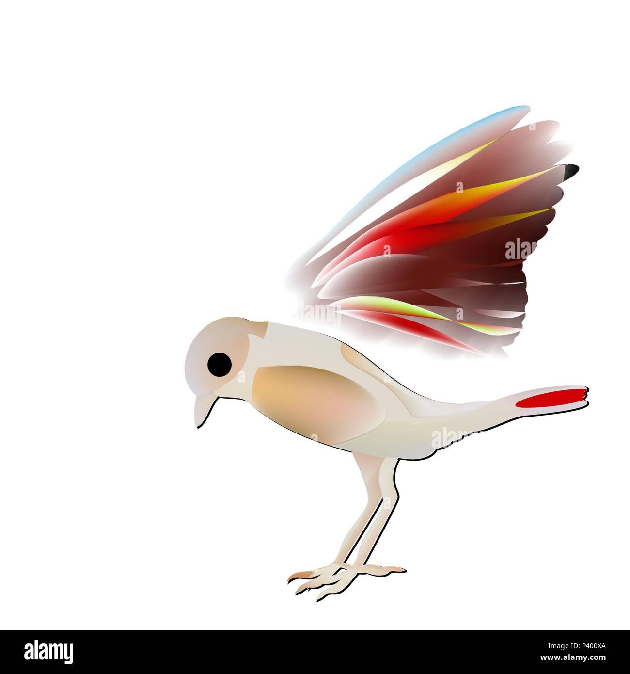 rare passerine bird, Saxicola insignis with a red abdomen. - Stock Image