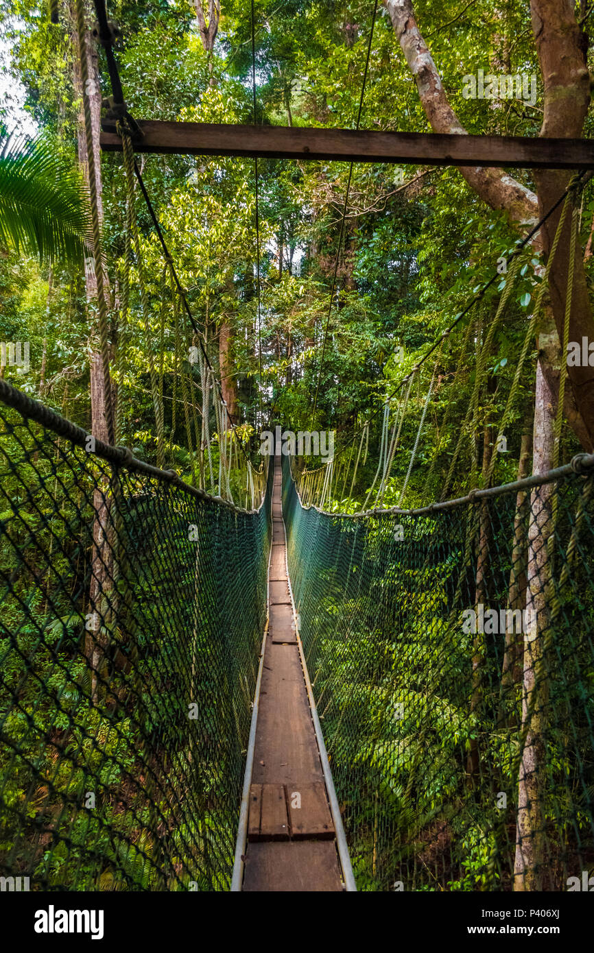 Taman Negara National Park's world's longest canopy walkway from a tourist's perspective, before making the first step on to the suspension bridge. - Stock Image
