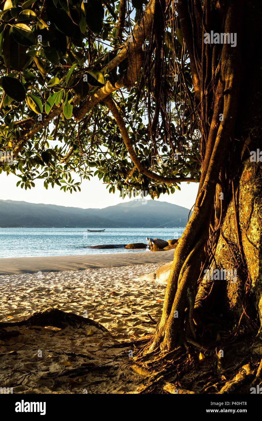 Praia da Daniela ao entardecer. Florianópolis, Santa Catarina, Brasil. Stock Photo