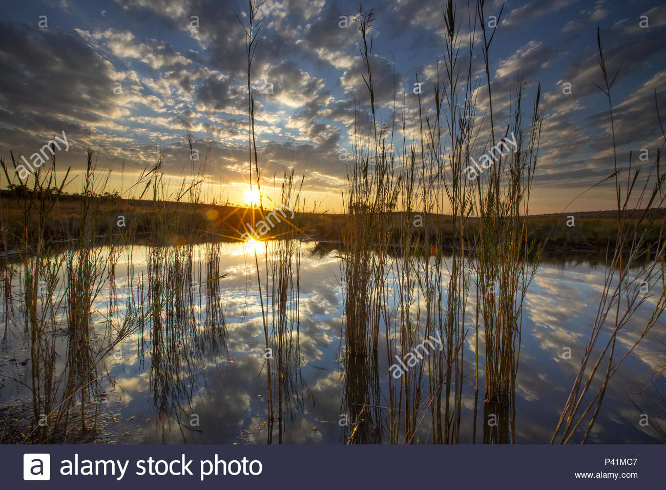 Clouds reflected on a pond in the Okavango Delta. - Stock Image