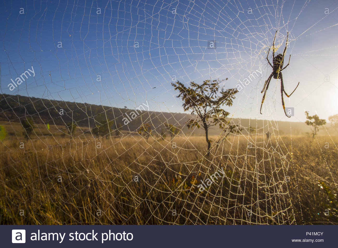 A spider on web in Angola. - Stock Image