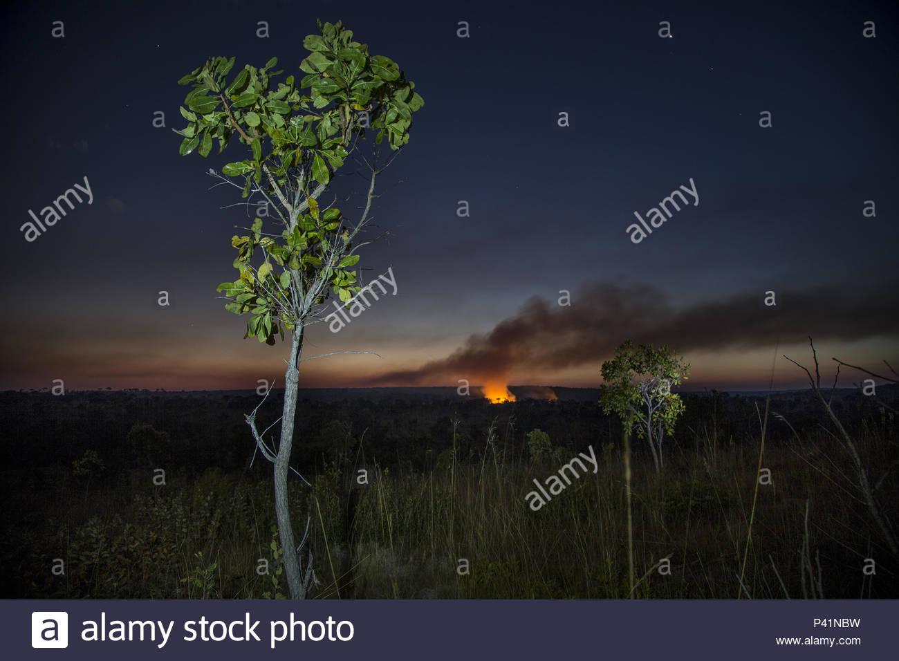 A fire in the Okavango Delta. - Stock Image