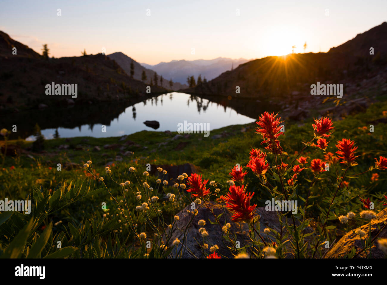Sunset and wildflowers at Echo Lake in the Trinity Alps wilderness Four Lakes loop backpacking trail in California. - Stock Image