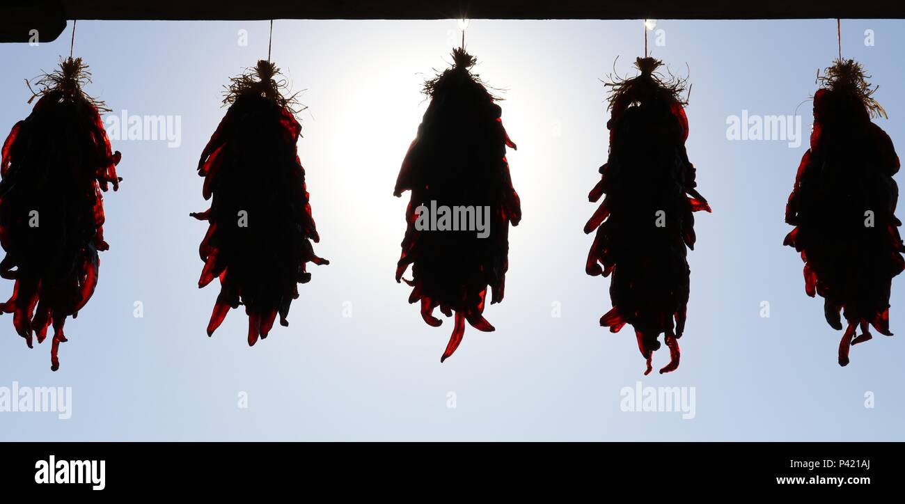 Chili Silhouete - Stock Image