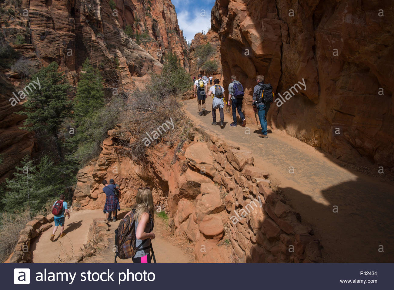 Walter's Wiggles portion of the West Rim Trail consisting of a series of 21 steep switchbacks carved into the sheer cliff face, Zion National Park, Wa Stock Photo