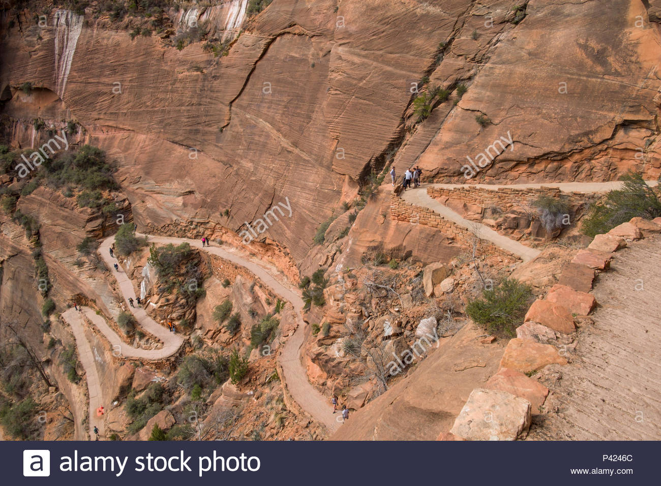 Looking down at the Walter's Wiggles portion of the West Rim Trail consisting of a series of 21 steep switchbacks carved into the sheer cliff face, Zi Stock Photo