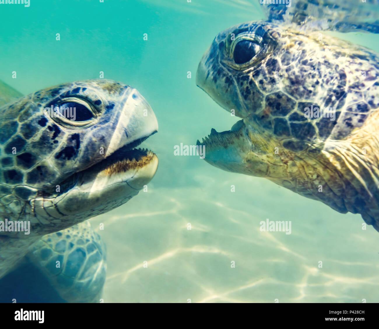 Turtles underwater at Hikkaduwa beach. Sri Lanka - Stock Image