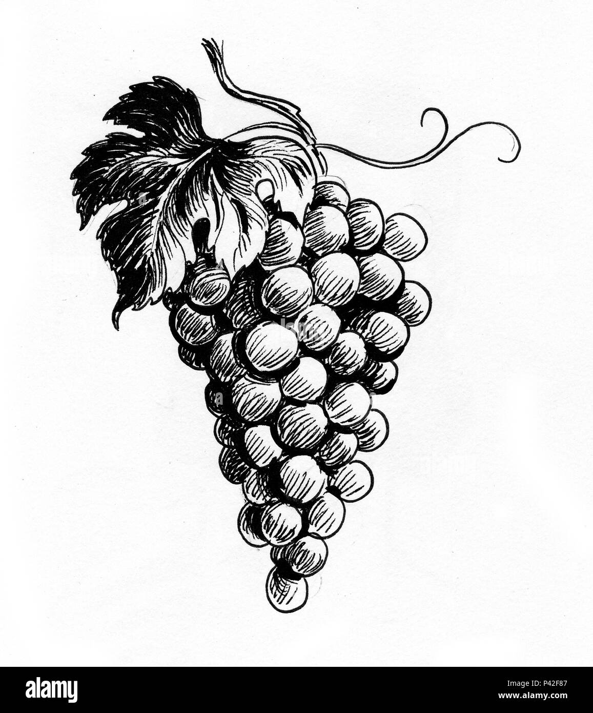 Bunch Of Grapes Ink Black And White Drawing Stock Photo Alamy