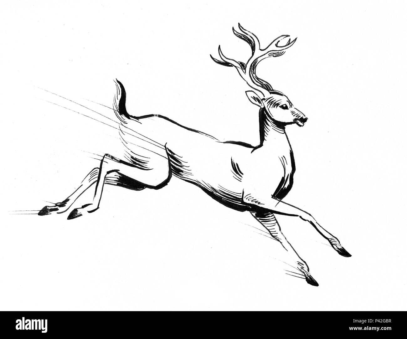running deer animal ink black and white drawing stock photo
