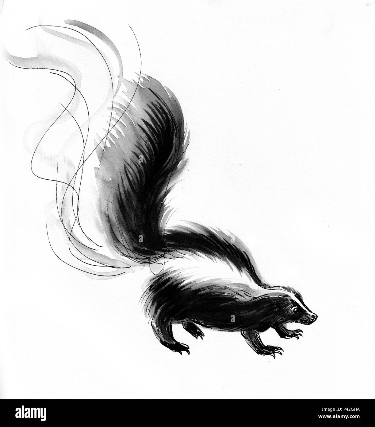 Stinky Skunk Ink Black And White Drawing Stock Photo 209039974 Alamy