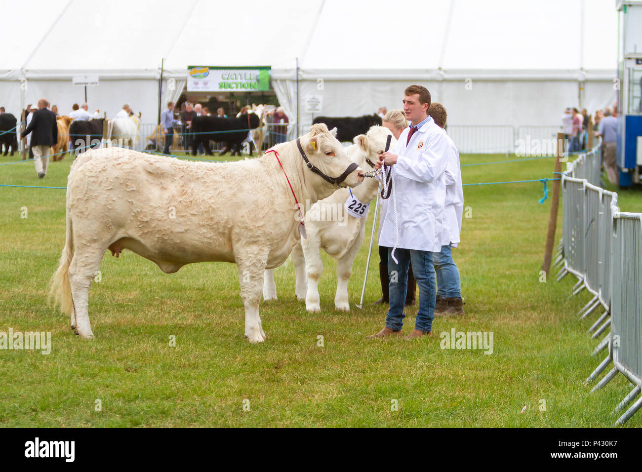 Cheshire, UK. 19 June 2018. The Cheshire Showground at Clay House Farm Flittogate Lane, Knutsford hosted the 2018 Royal Cheshire County Show. The Show is about the fabulous sights, characters & flavours of Cheshire & beyond Credit: John Hopkins/Alamy Live News - Stock Image