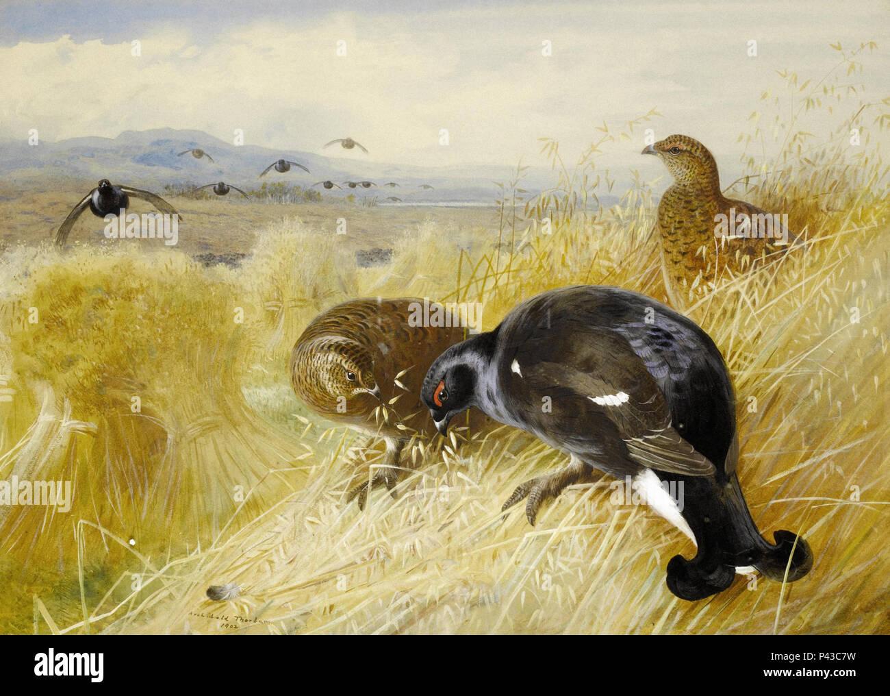 Thorburn  Archibald - on the Stooks - Blackgame - Stock Image