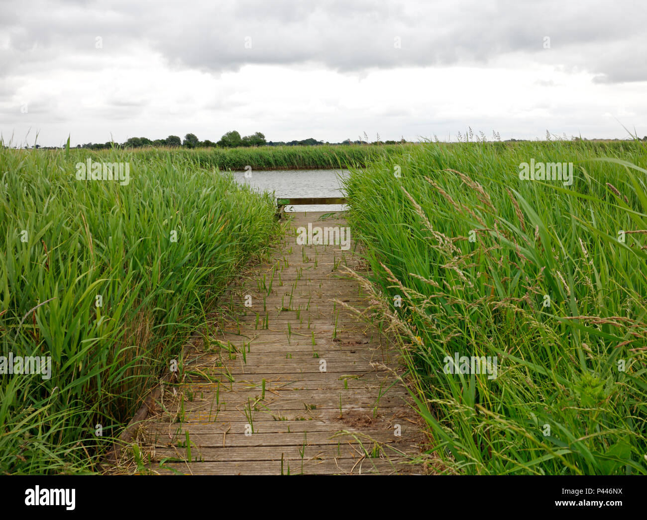 A purpose built match fishing peg on the River Bure on the Norfolk Broads at Upton, Norfolk, England, United Kingdom, Europe. - Stock Image