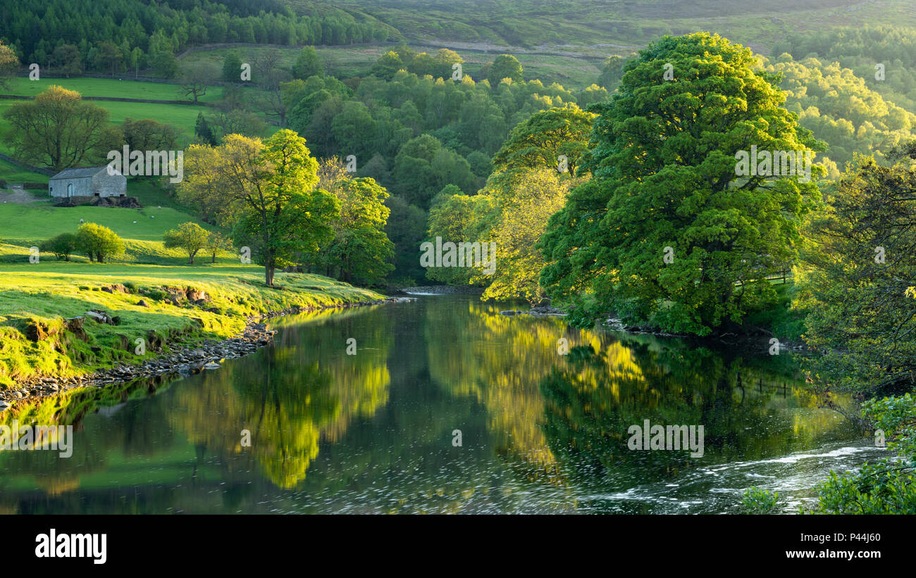 Mirror images on water & riverbank trees reflected on calm, still, scenic, River Wharfe on sunny evening - Wharfedale, North Yorkshire, England, UK. - Stock Image