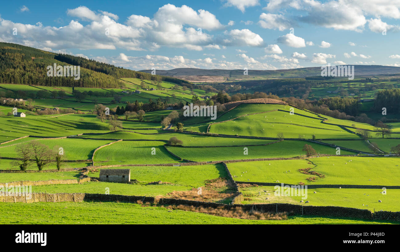 Under dramatic blue sky, long-distance picturesque view to Wharfedale (isolated barns & green pasture in sunlit valley) - Yorkshire Dales, England, UK Stock Photo