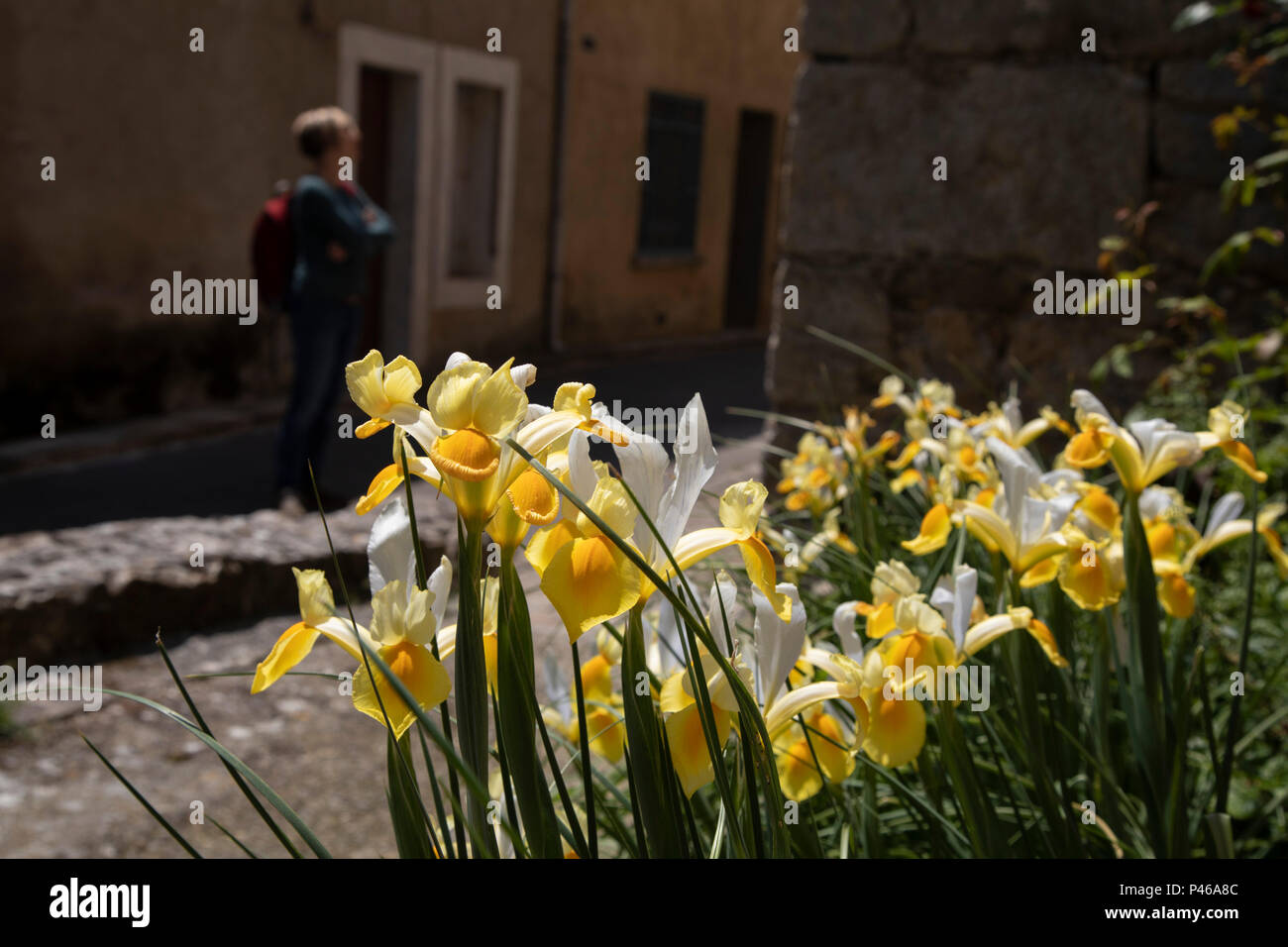Spring flowers in termes france termes is a commune in the aude spring flowers in termes france termes is a commune in the aude department in southern france mightylinksfo