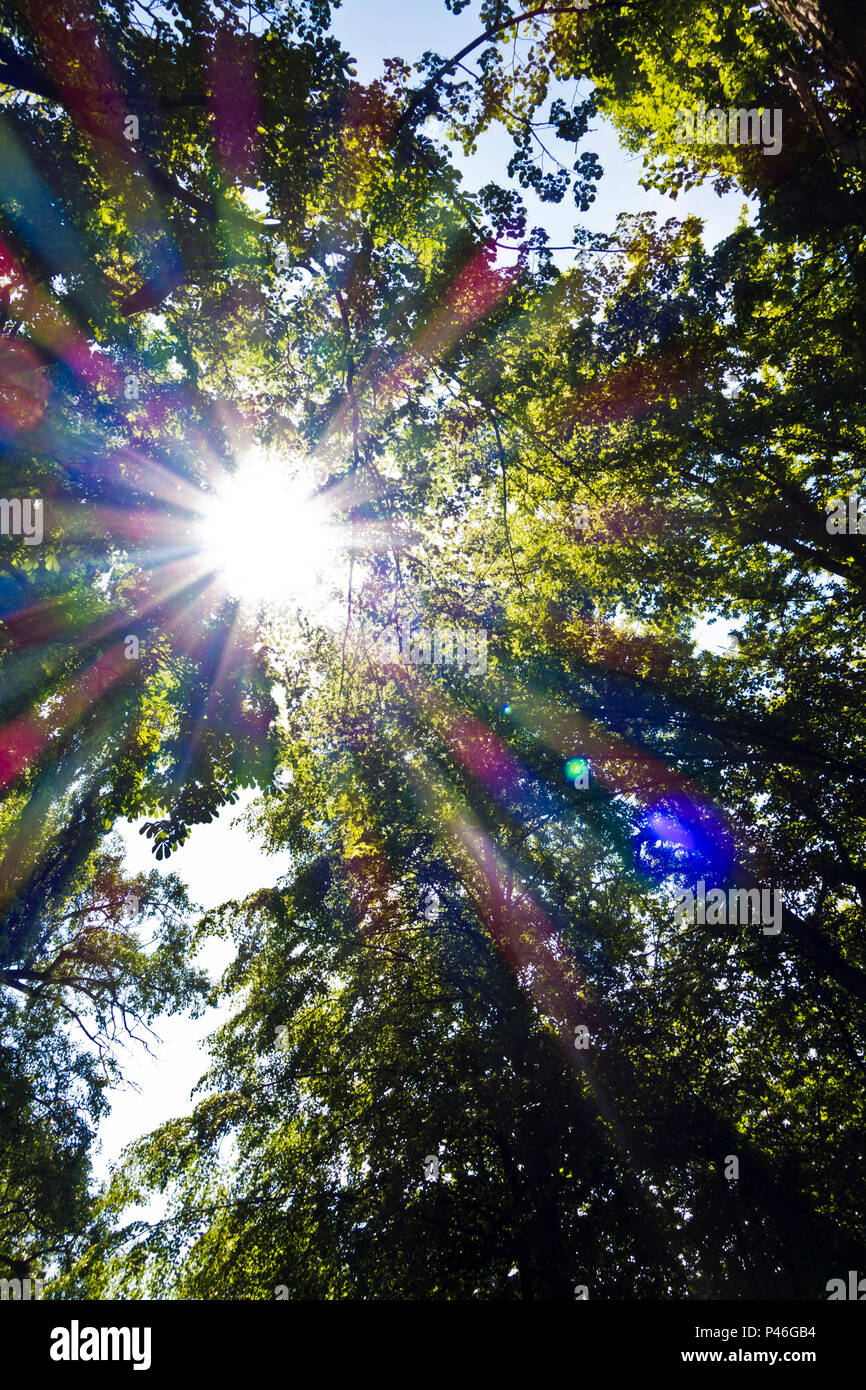 sun flare across the tree branches - Stock Image