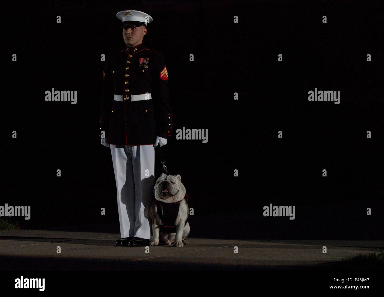 A Us Marine Escorts Cpl Chesty Xiv Mascot Of The Marine Corps