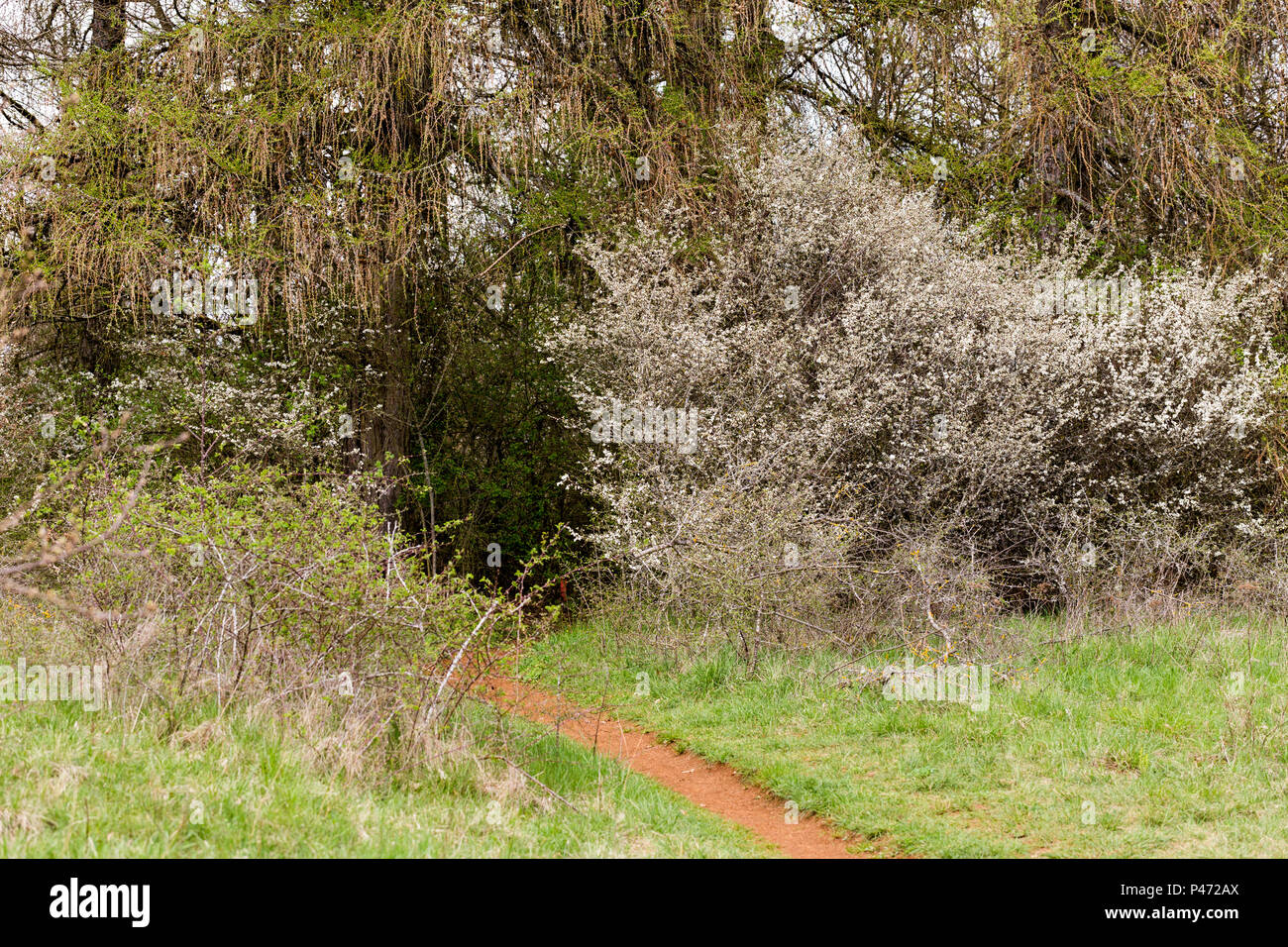 Walk over old mining area - Stock Image