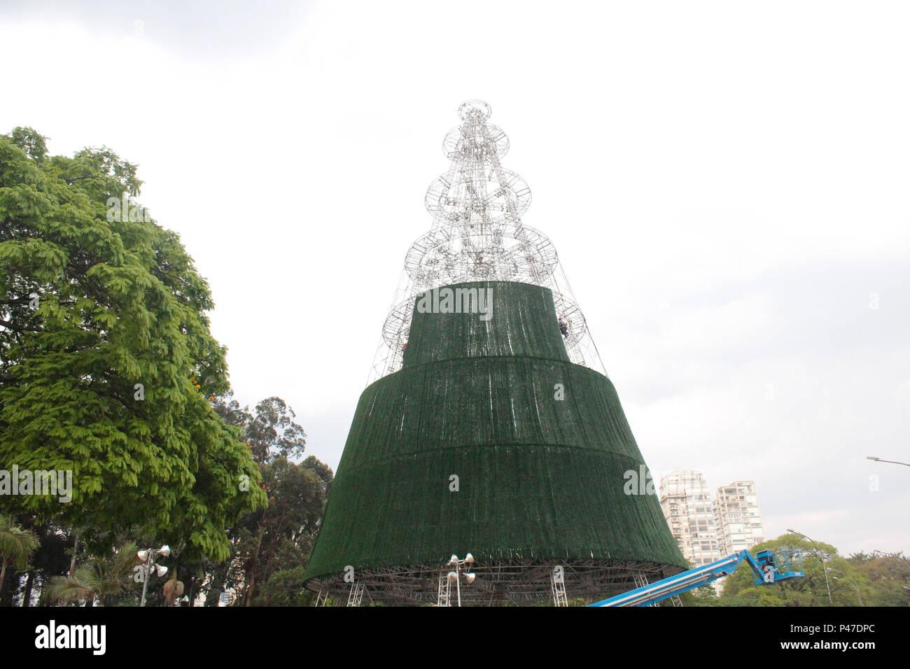 SÃO PAULO, SP - 08/12/2014: ÁRVORE NO PARQUE IBIRAPUERA -