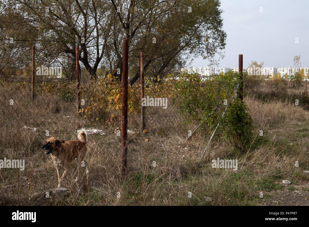 Sofia, Bulgaria, watchdog on a property on the outskirts - Stock Image