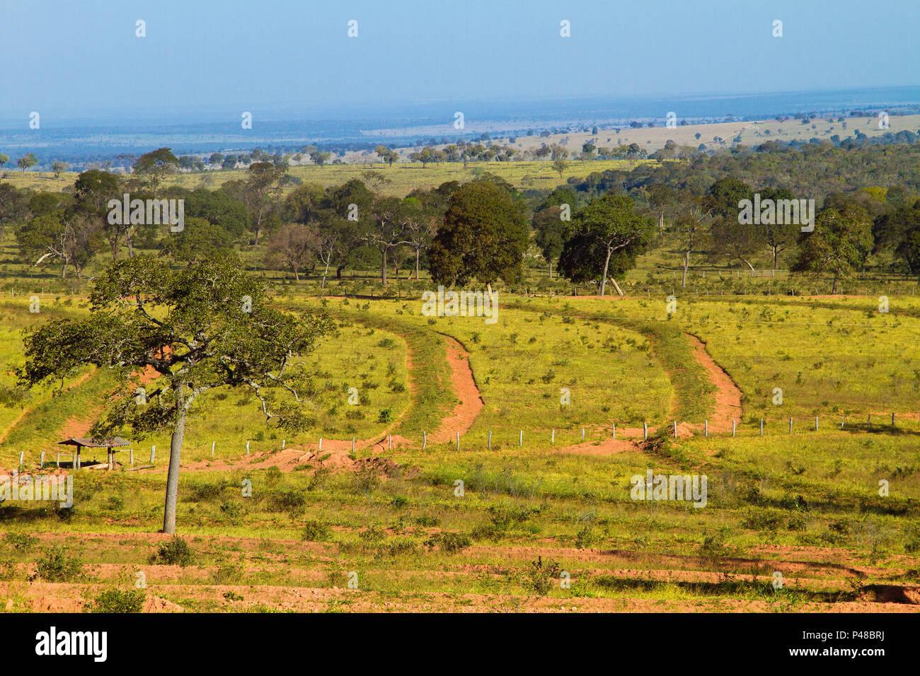 Corguinho Mato Grosso do Sul fonte: c8.alamy.com